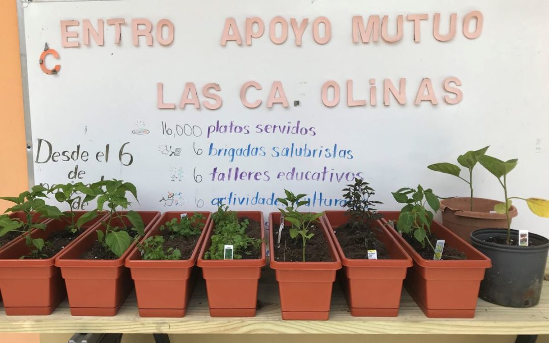 Growing Peppers—and Resiliency—in Puerto Rico
