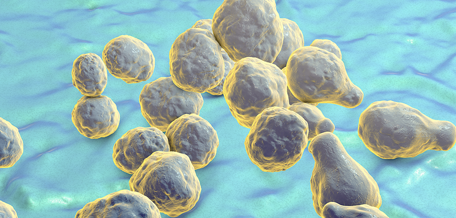 A New Way to Fight Deadly Fungal Infections